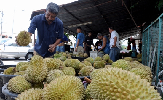 Raub's Musang King durians popular in China - August 22, 2017