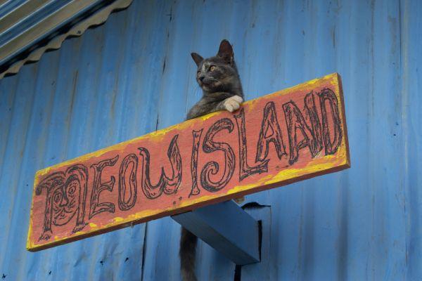 6-meow-island7776D704-C9B2-8884-AFA7-20F9E3EDBB6B.jpg